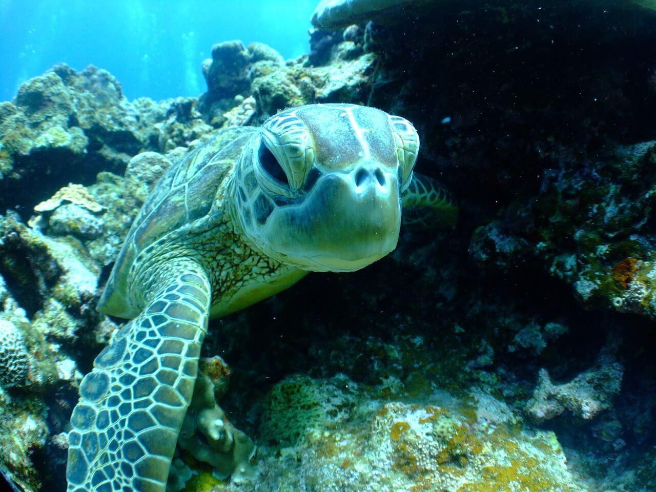 Enjoy Sea Turtle Season in Puerto Vallarta